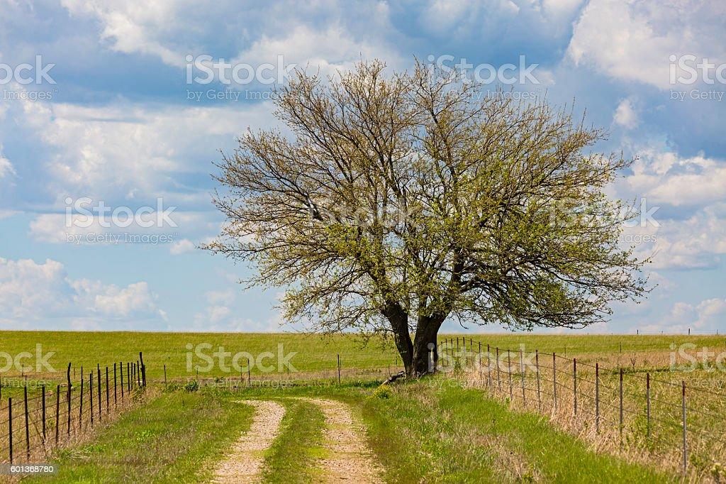 Tree, new spring growth, farm track, fences, field, clouds stock photo