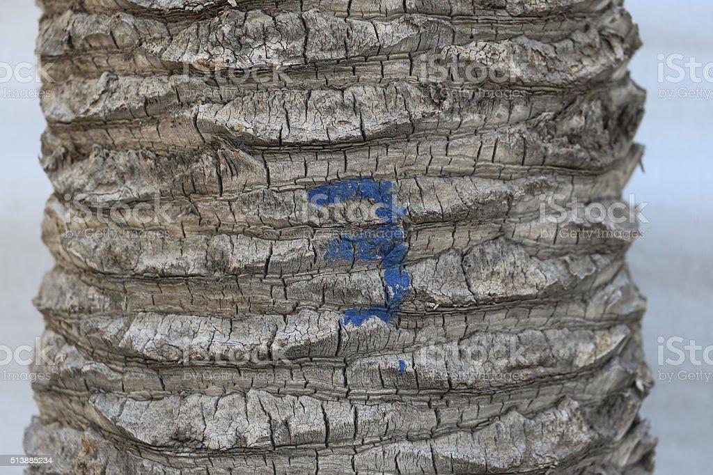 Tree Number Three stock photo