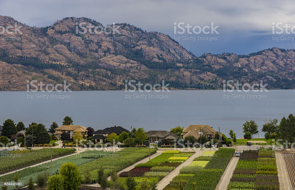 Tree Nursery Overlooking Okanagan Lake Kelowna BC Canada stock photo