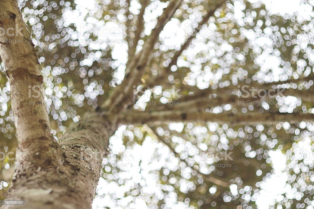 Tree of Bokeh stock photo