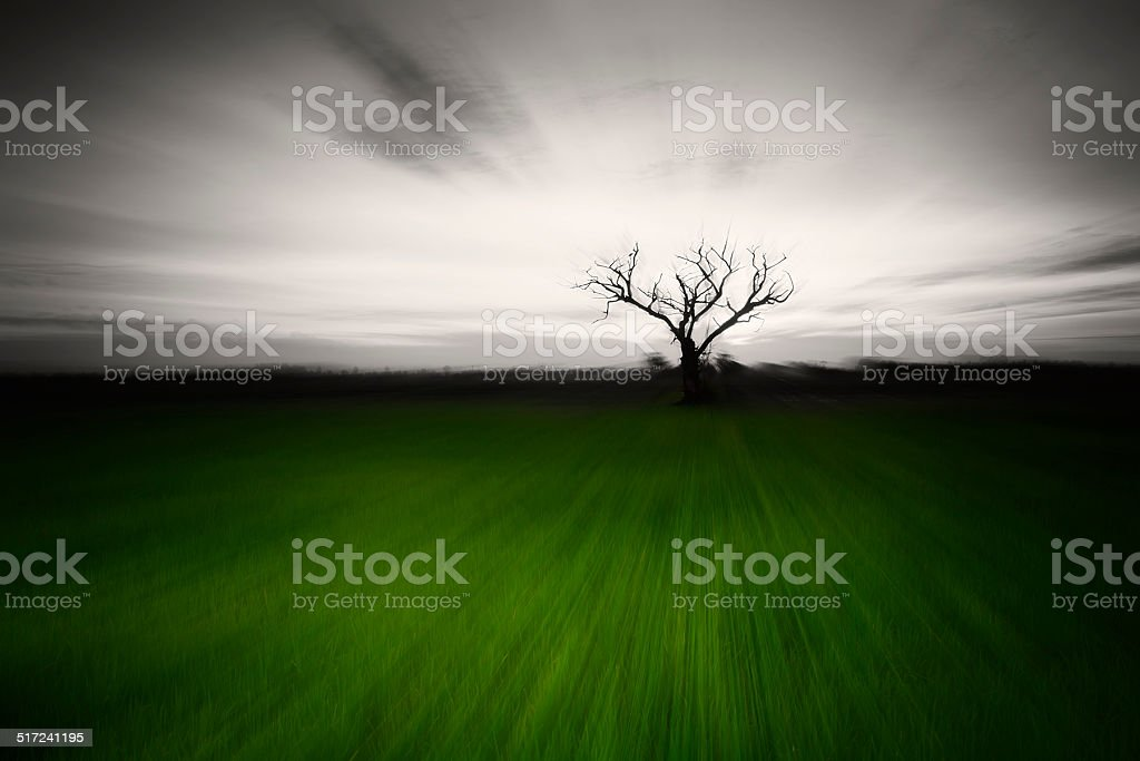 Tree of hollow royalty-free stock photo