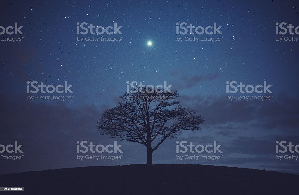 Tree of Jupiter stock photo