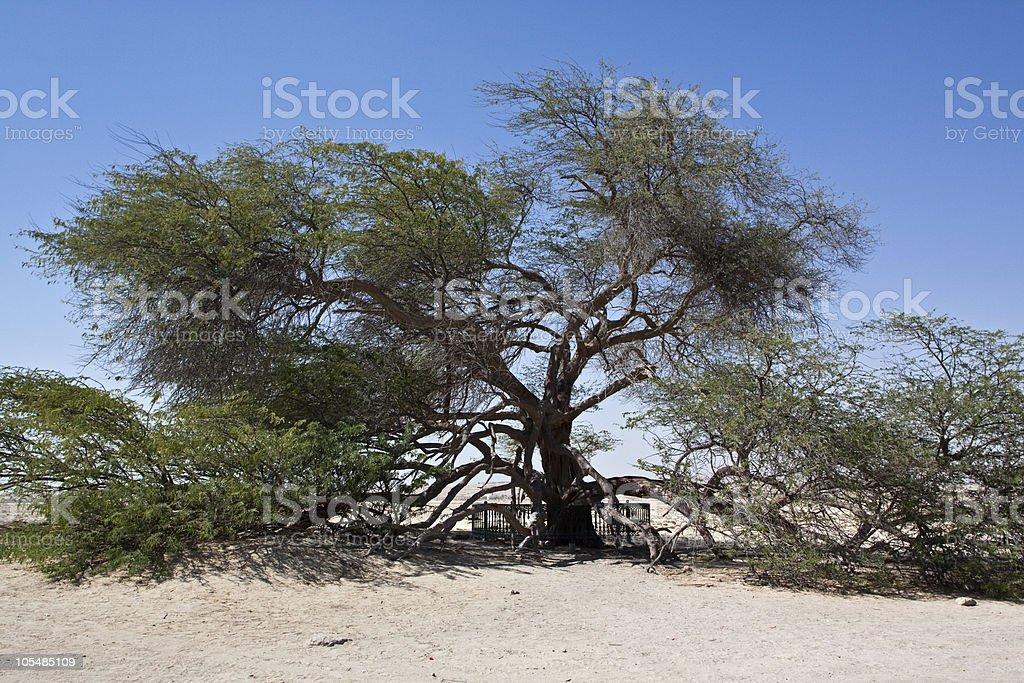Árvore da Vida Barém foto de stock royalty-free