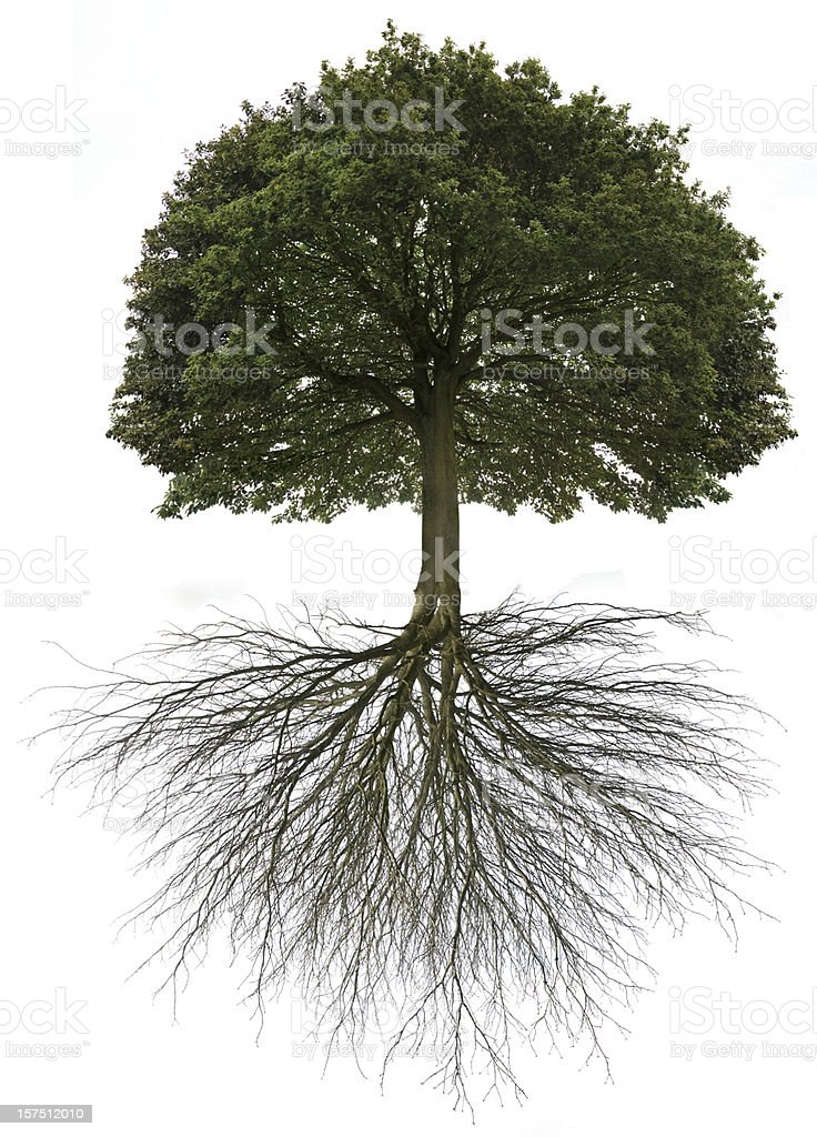 Tree of Life stock photo