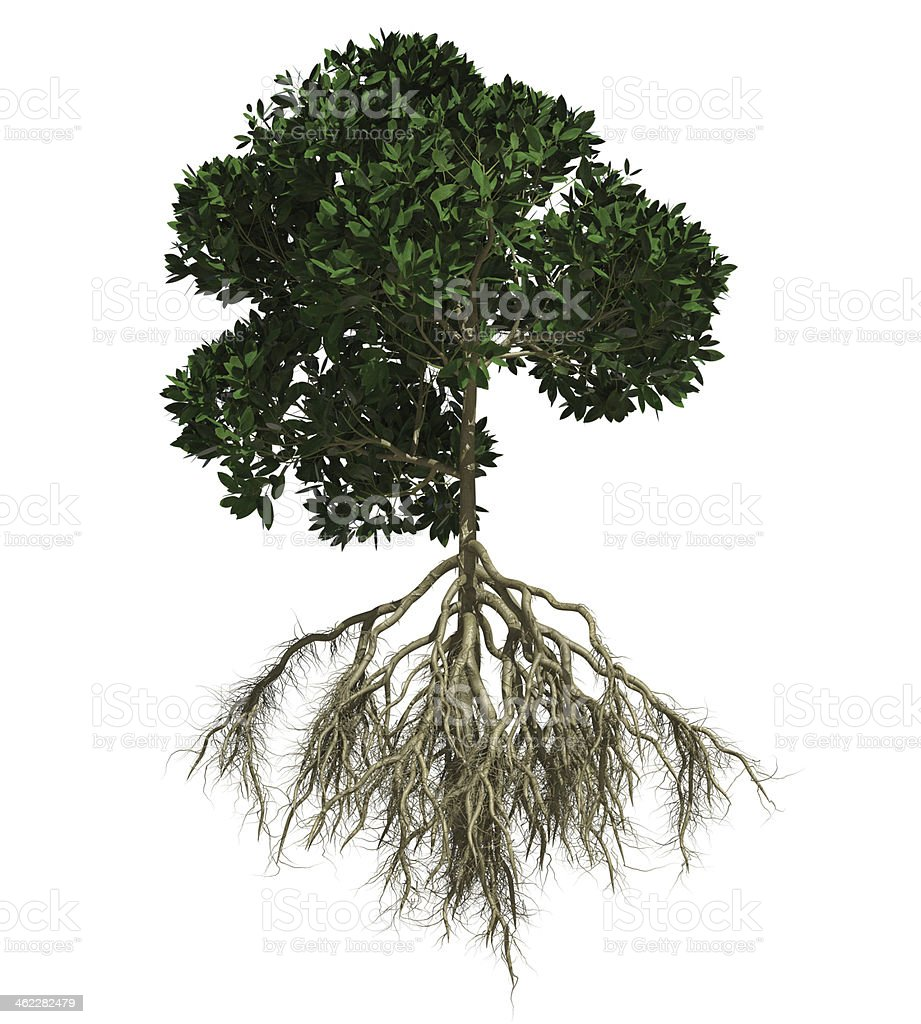 Tree of Life with roots stock photo
