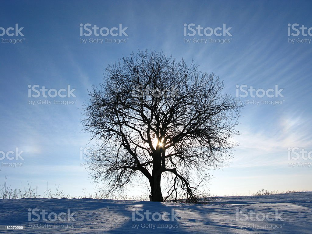 Tree of ?ope stock photo