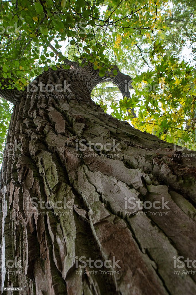 Tree old trunk stock photo