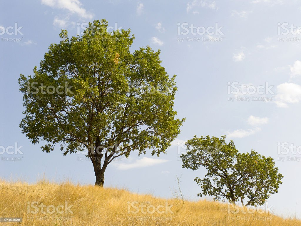 Tree on a background of the sky stock photo
