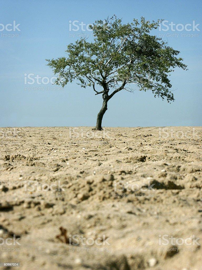 Tree on a Beach stock photo