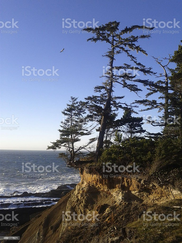 Tree on a cliff, Sunset Bay stock photo
