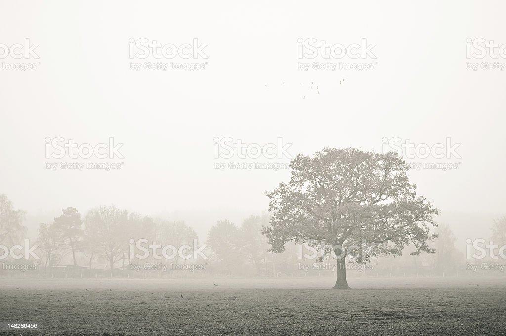Tree on a foggy day. stock photo