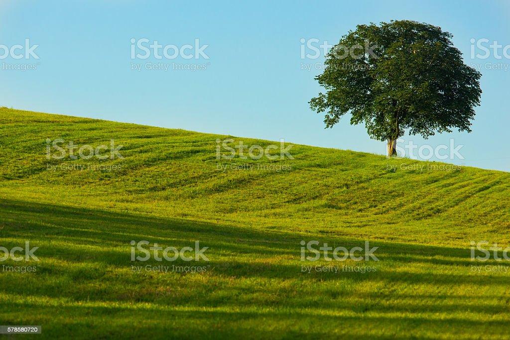 Tree on a green field stock photo