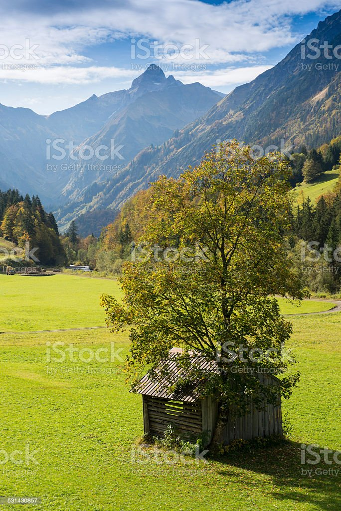 Tree on a green meadow in a mountain valley stock photo