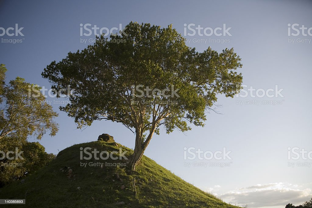 Tree on a hill royalty-free stock photo