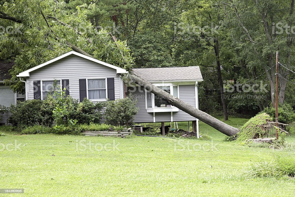 Tree On A House royalty-free stock photo