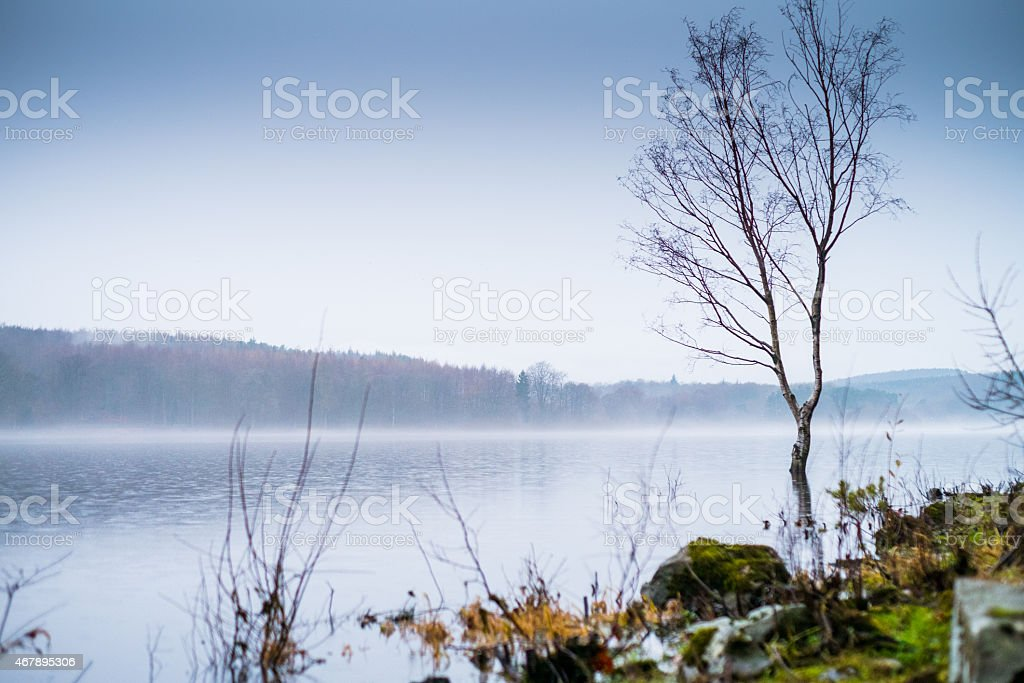 Tree on a lake stock photo