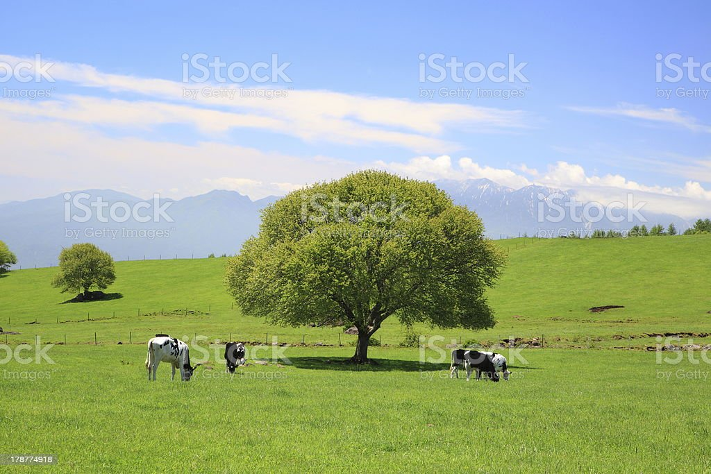 Tree on a meadow and cow stock photo
