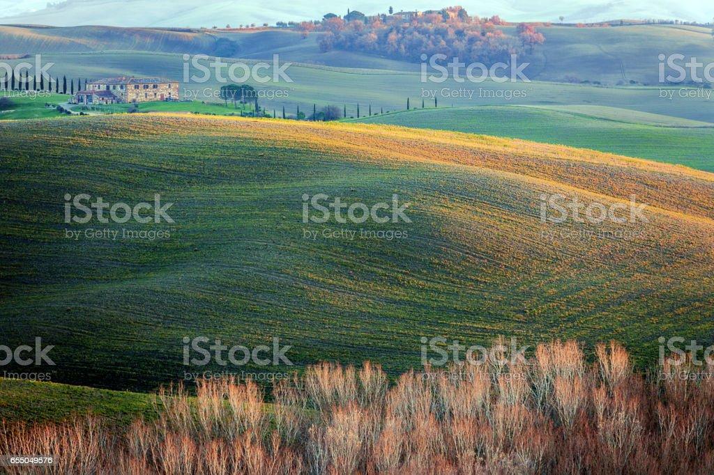 Tree on a plowed field,autumn,poplar,Tuscany,Italy stock photo