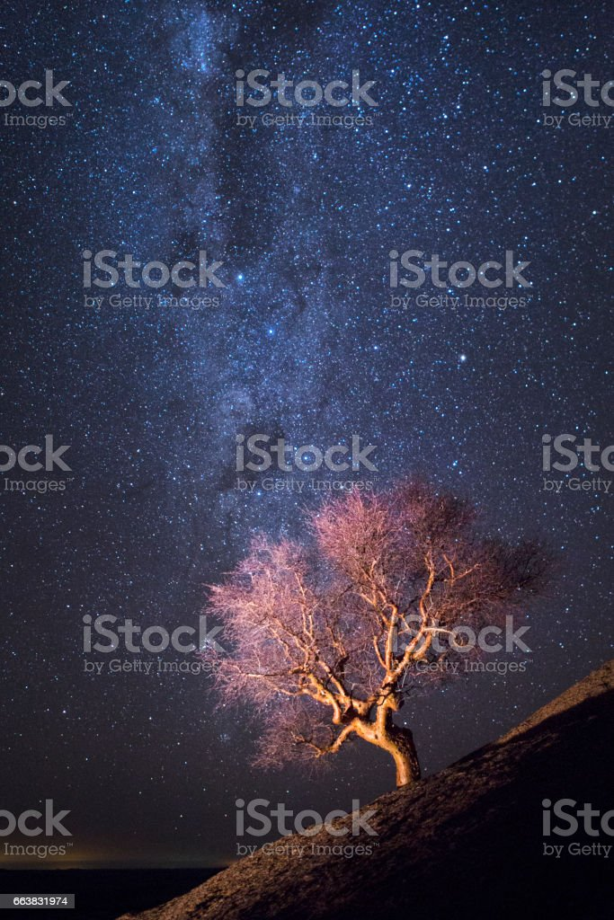 Tree  on a rock outcrop under the Milky Way stock photo