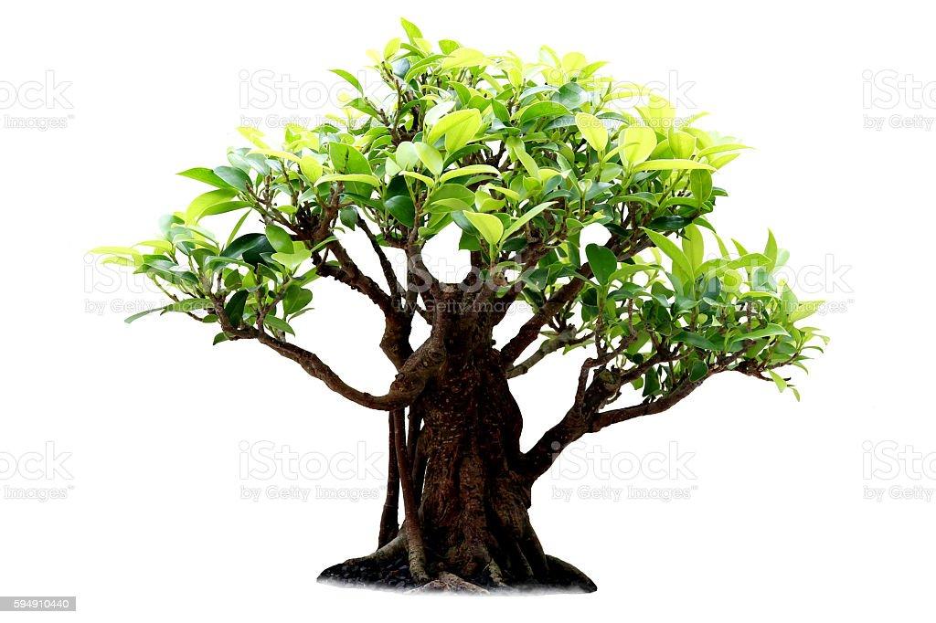 Tree on a white background stock photo