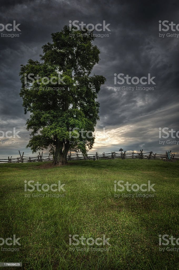 Tree on Bloody Lane stock photo