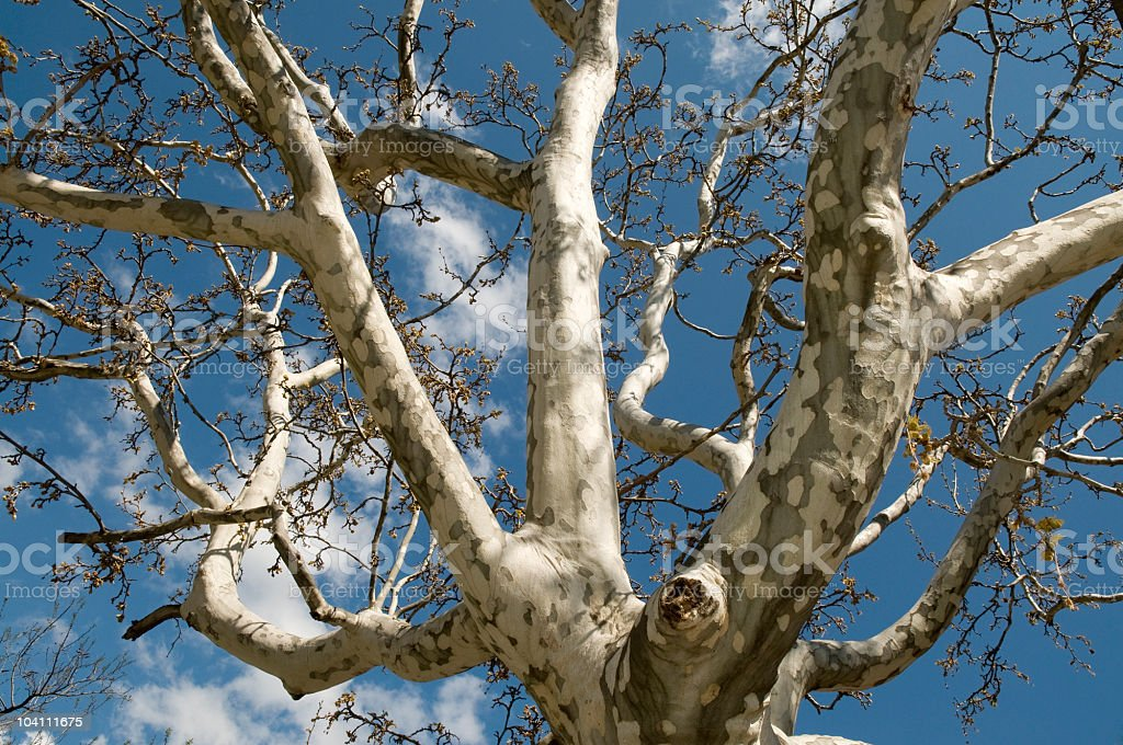 Tree on Blue Sky stock photo