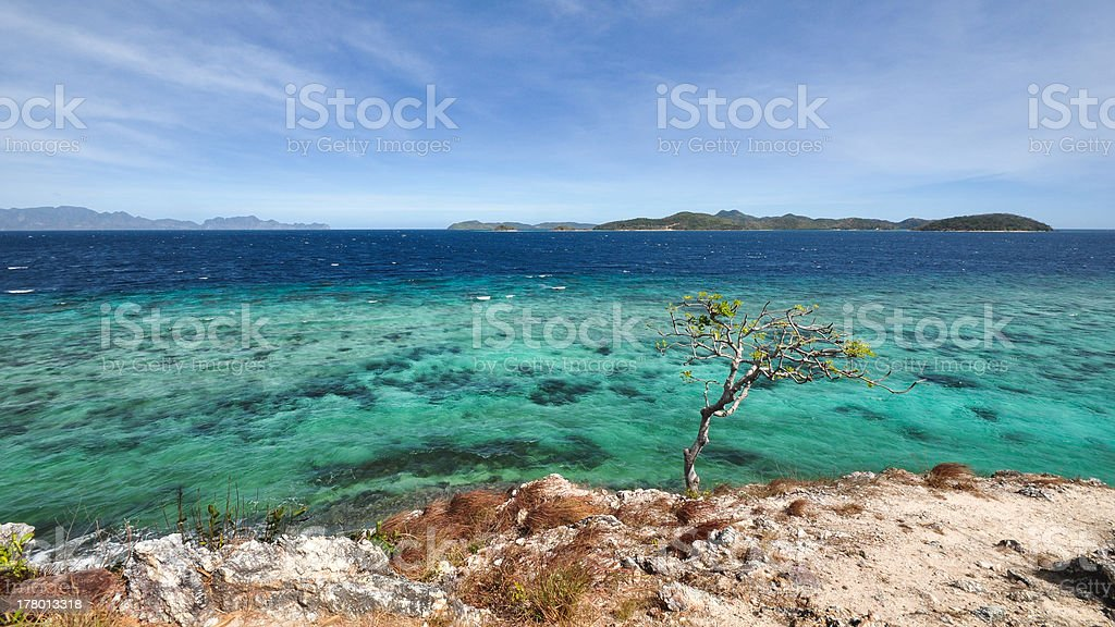 tree on cliff over ocean royalty-free stock photo