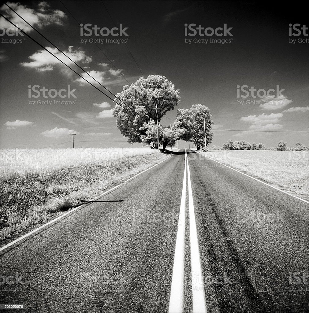 Tree on Country Road with Unusual Shape stock photo