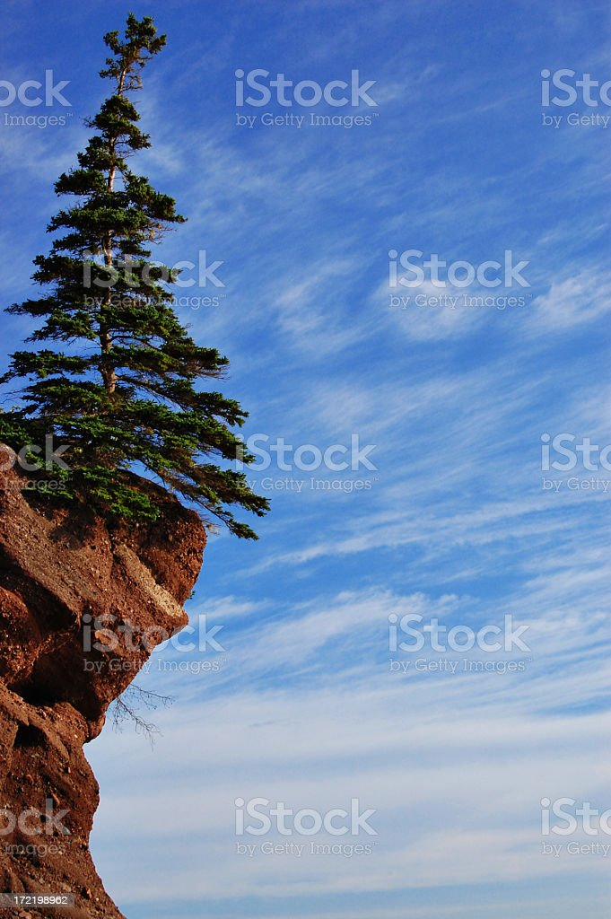 Tree on edge of steep cliff royalty-free stock photo