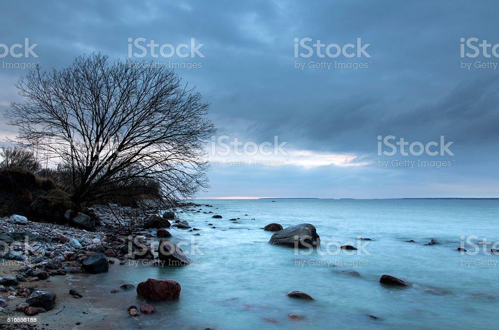 Tree on eroded beach royalty-free stock photo
