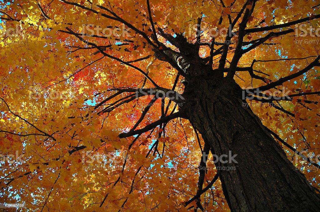 Tree On Fire stock photo