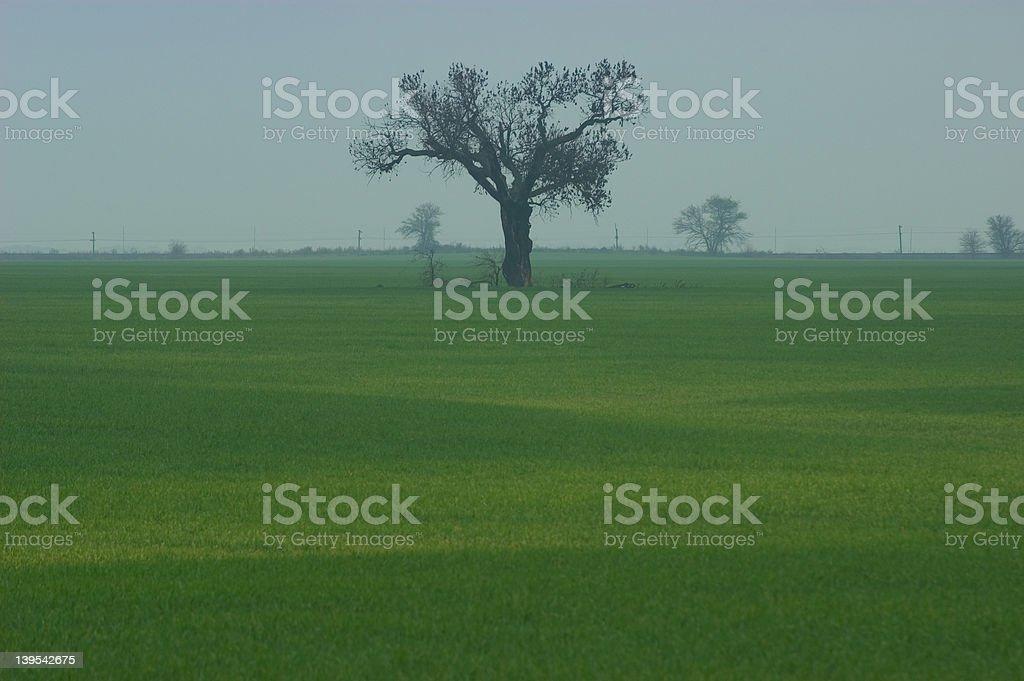 Tree on foggy day royalty-free stock photo