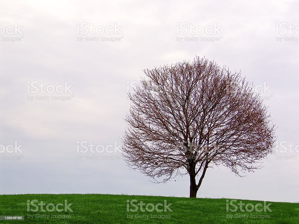 tree on grassy hill royalty-free stock photo