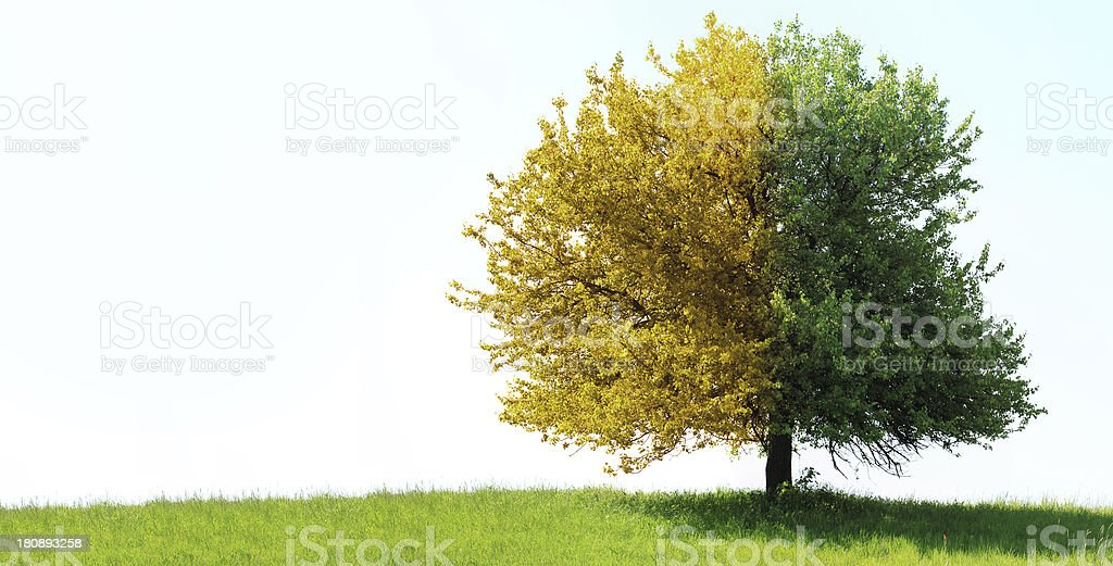 Tree on green field royalty-free stock photo