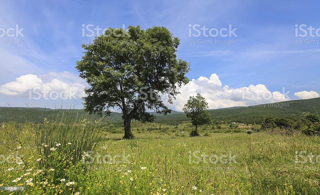 Tree on green field stock photo