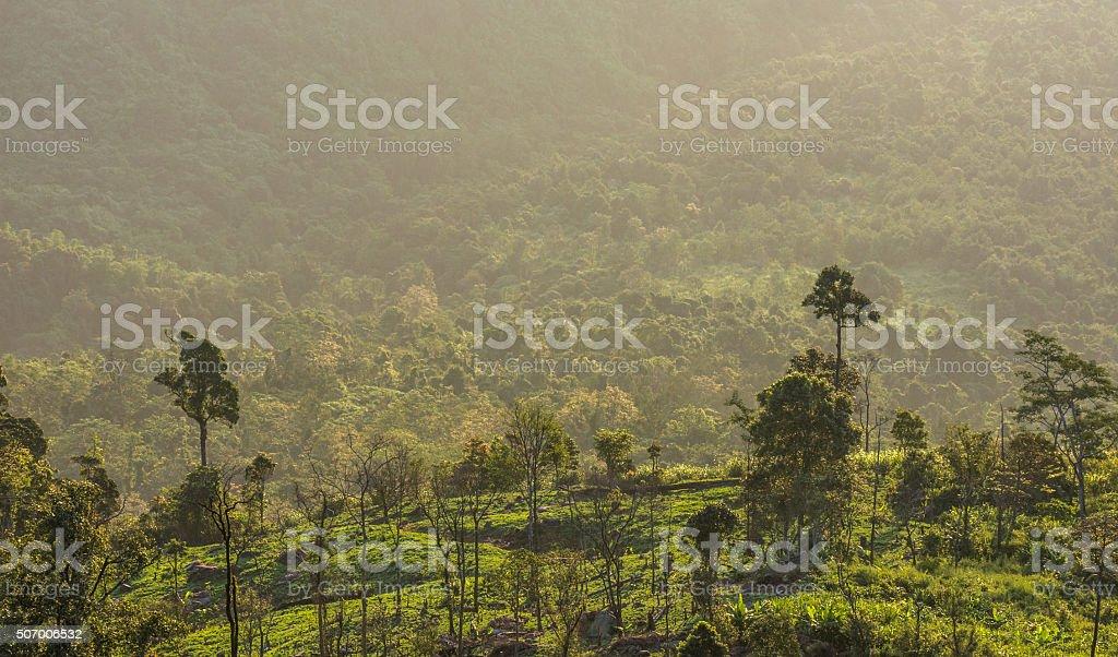 tree on moutain stock photo