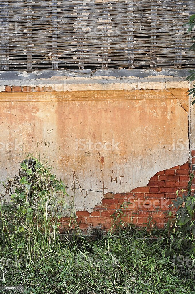 tree on old red bricks wall background royalty-free stock photo