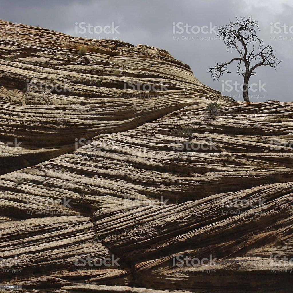 tree on red stones stock photo