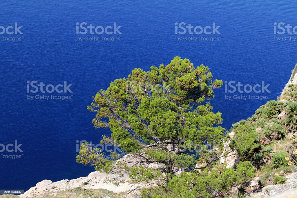 tree on sea stock photo