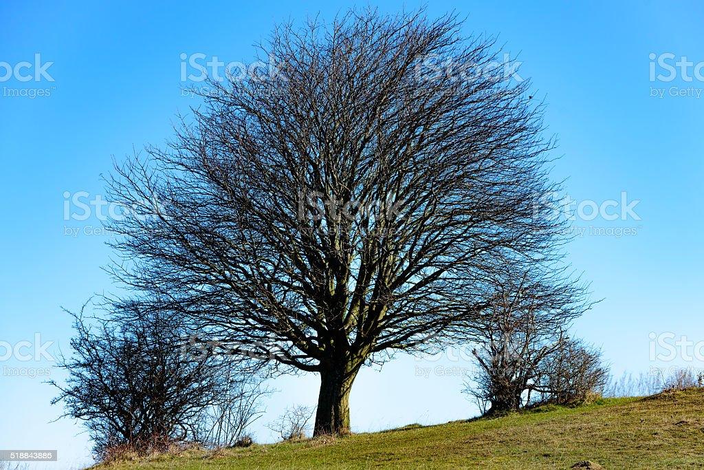 Tree on slope stock photo