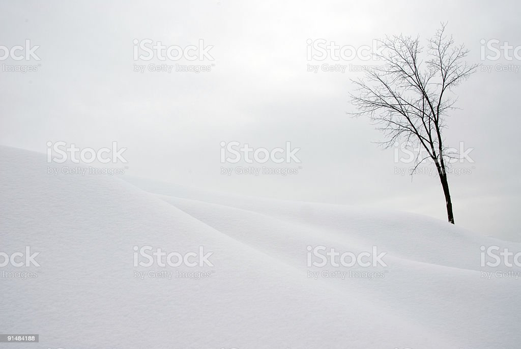 Tree on Snow Covered Hill stock photo