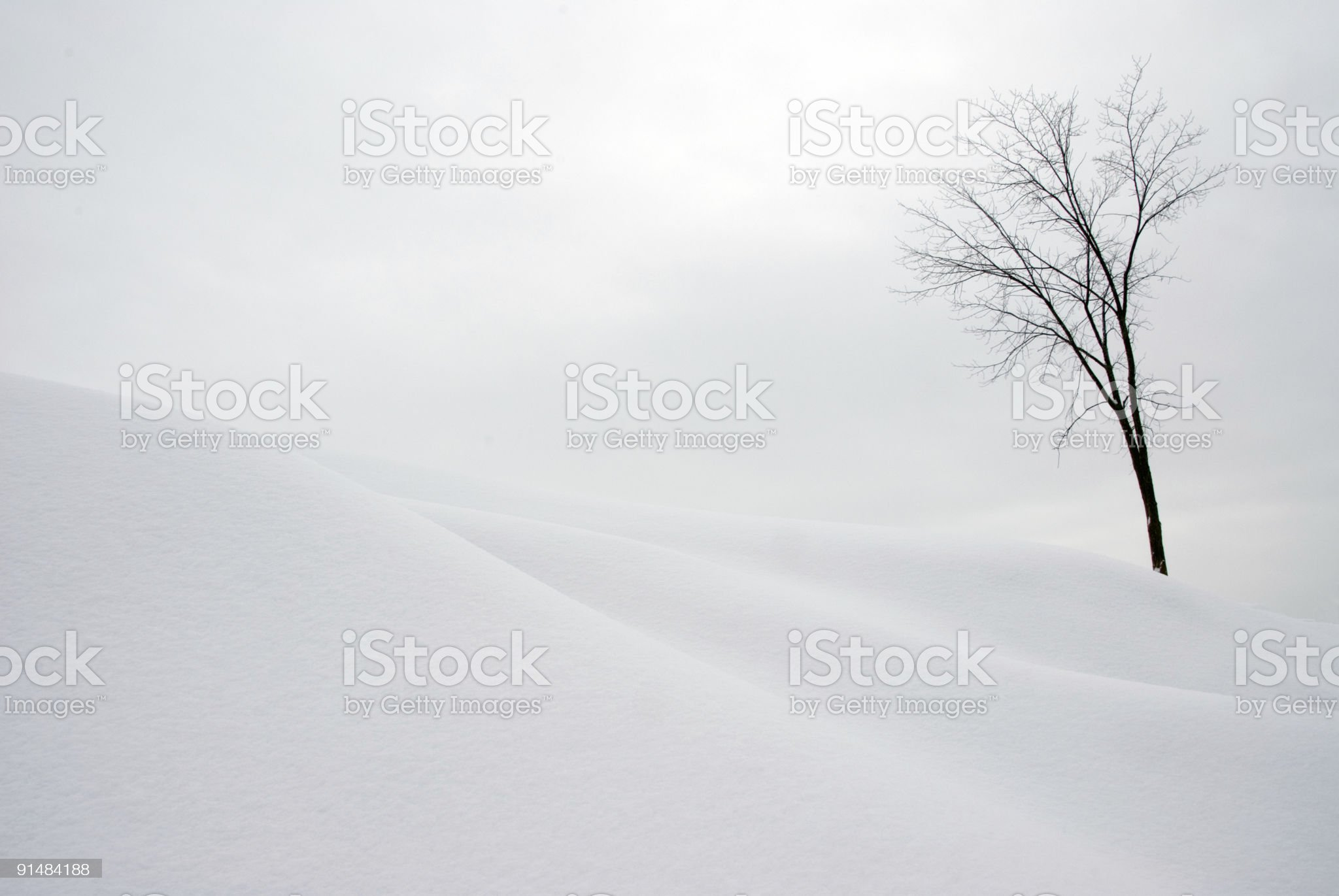 Tree on Snow Covered Hill royalty-free stock photo