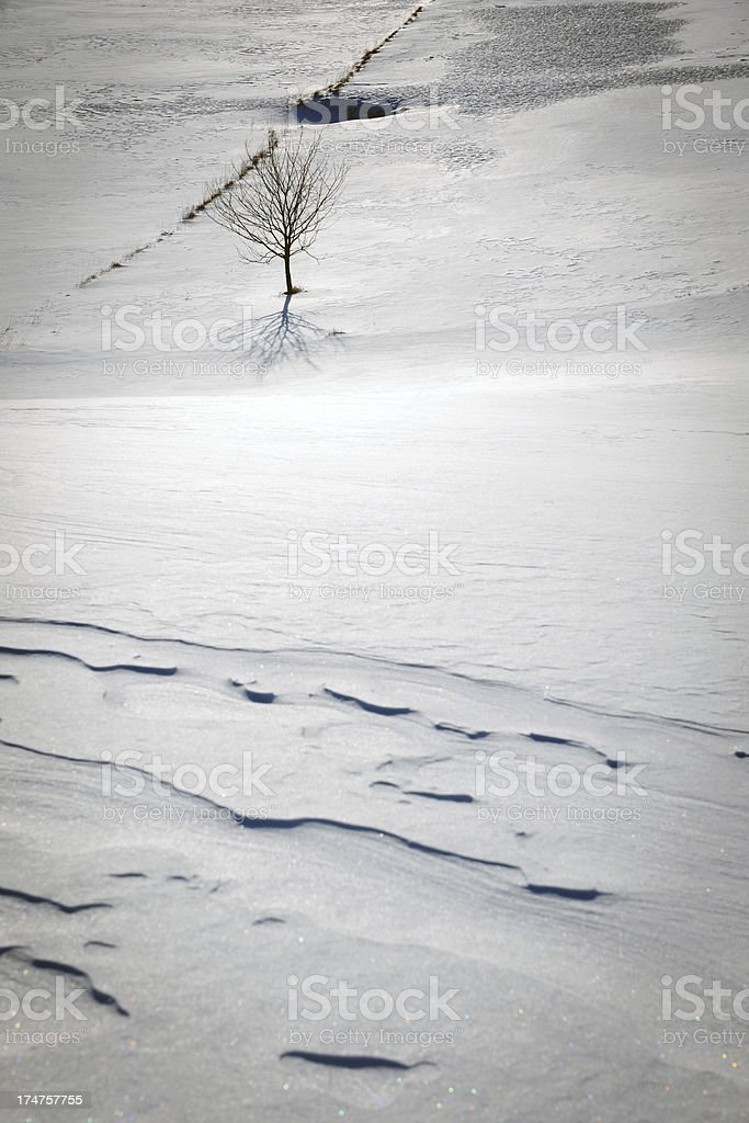 Tree on Snowy Plateau Banjsice Slovenia royalty-free stock photo