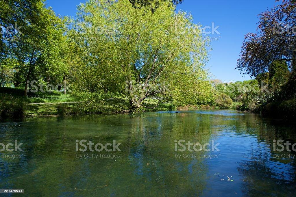 Tree on the Avon river, Christchurch (NZ) stock photo
