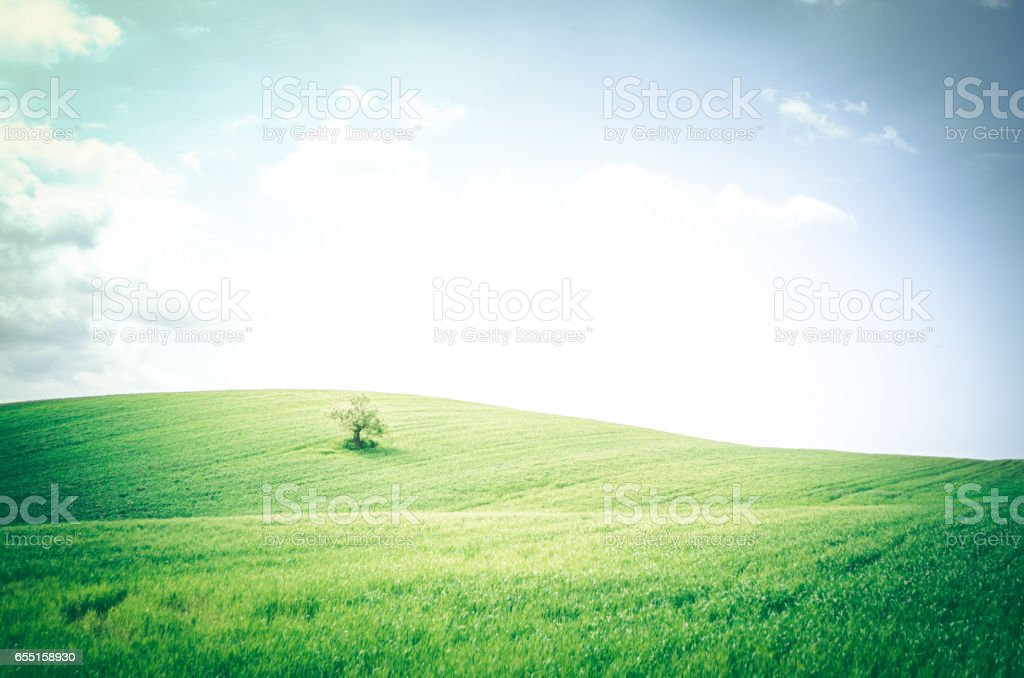A tree on the beautiful rolling hills of Tuscany Italy stock photo