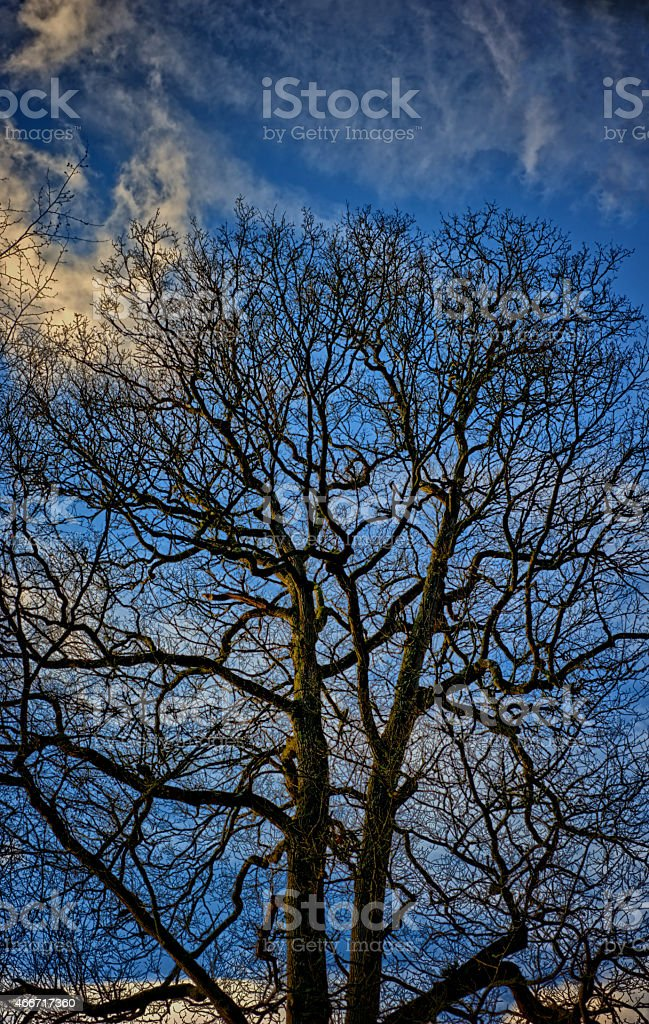 Tree on the blue sky background stock photo