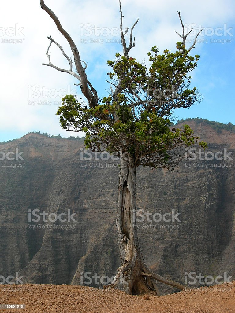 Tree on the Edge royalty-free stock photo