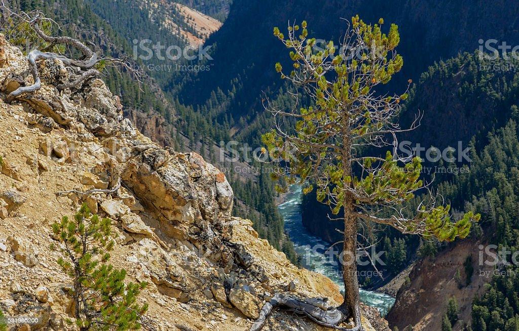 Tree on the Edge stock photo