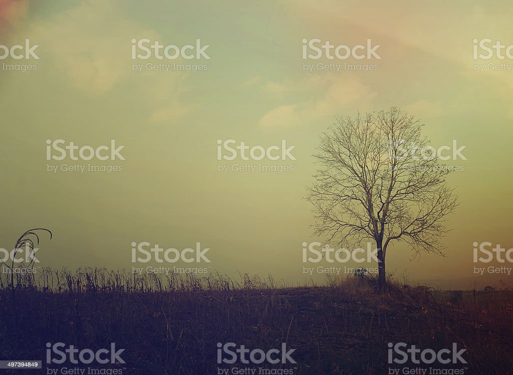 Tree on the hill. stock photo