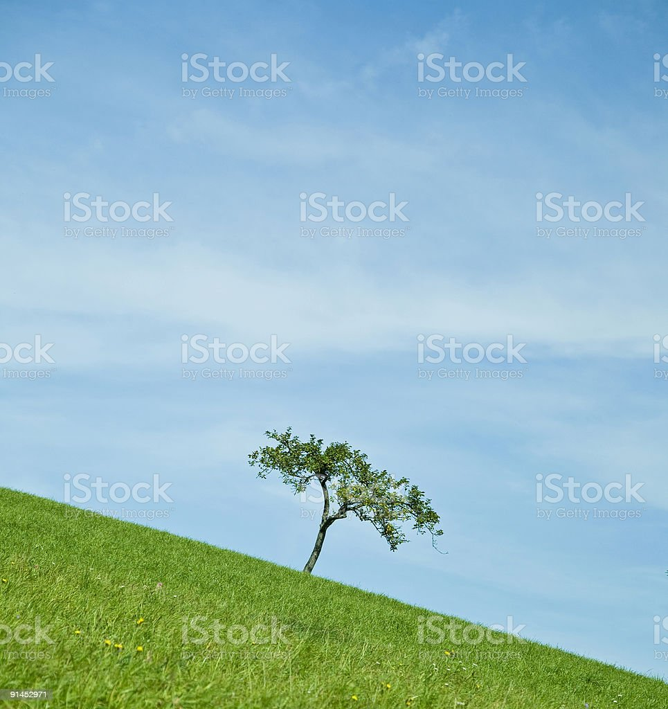 tree on the hill royalty-free stock photo